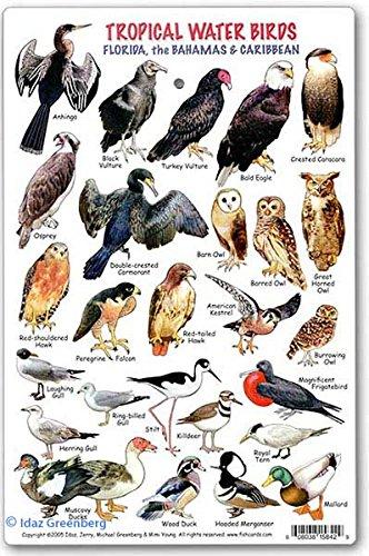 Tropical Water Birds ID Card Florida, the Bahamas & (Florida Keys Water)