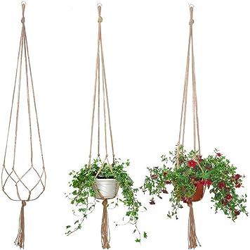 吊るす 観葉 植物