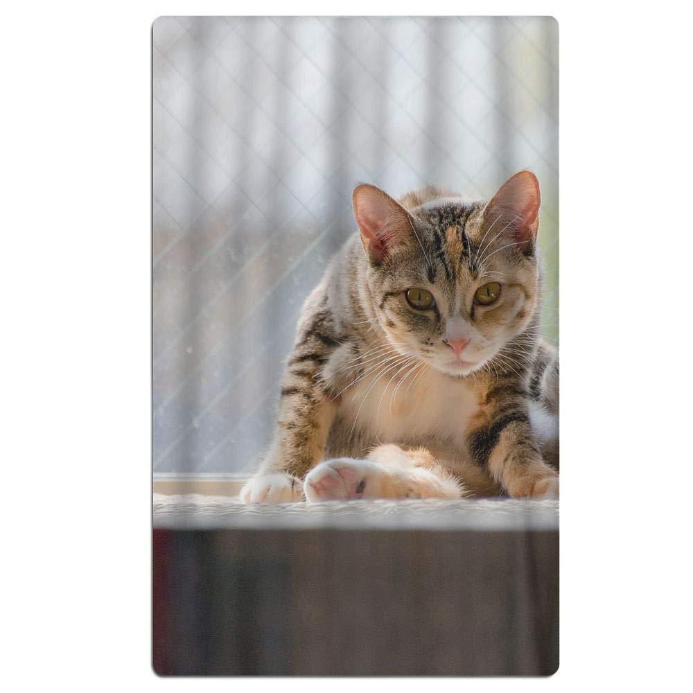 Phyllis Walker Cat Sitting Window Pet Beach Towel Soft Quick Dry Lightweight High Absorbent Pool Spa Towel for Men Women 31 X 51 Inch