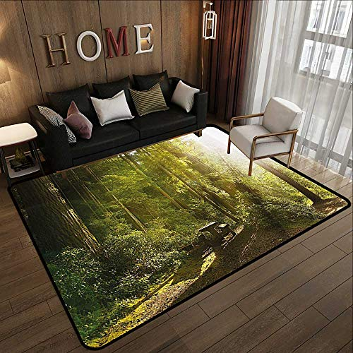 Outdoor Rugs,Nature,Sunny Rainforest with Wood Bench in Olympic National Park Washington USA Photo,Green Yellow 55