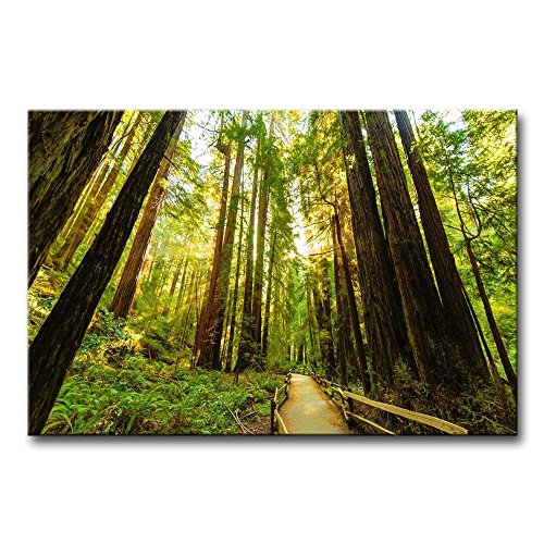 So Crazy Art - Canvas Print Wall Art Painting For Home Decor,Fenced Road Through The Redwood Trees Sunrise Grass Paintings Modern Giclee Stretched And Framed Artwork Oil The Picture For Living Room Decoration,Landscape Pictures Photo Prints On Canvas