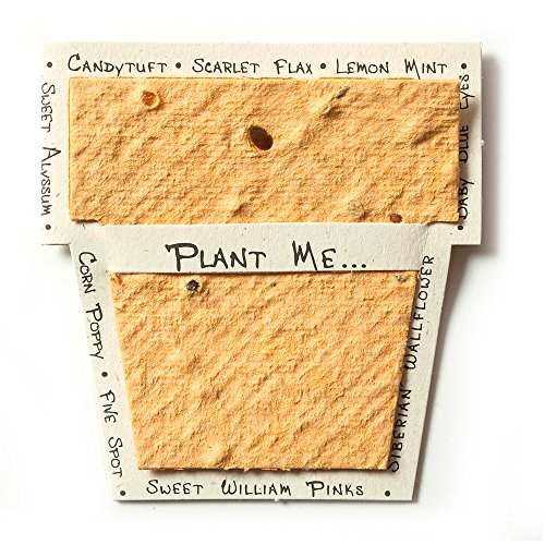 Bloomin Mini Desert Orange Pot-Shaped Seed Paper Enclosure Cards 9 Card Set - Perfect for Valentine's Day, Mother's Day and Wedding Anniversaries! Size: 2.25 x 2.25