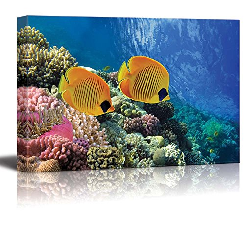 wall26 - Canvas Prints Wall Art - Coral Reef and Tropical Fish in Sunlight | Modern Wall Decor/Home Decoration Stretched Gallery Canvas Wrap Giclee Print. Ready to Hang - 24