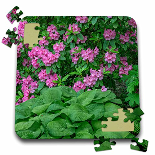 Danita Delimont - Flowers - Oregon, Portland, Pink blossoms of rhododendrons in bloom. - 10x10 Inch Puzzle (pzl_279358_2) (Blossom Portland)