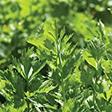 David's Garden Seeds Herb Celery Cutting SL9225 (Green) 500 Non-GMO, Open Pollinated Seeds