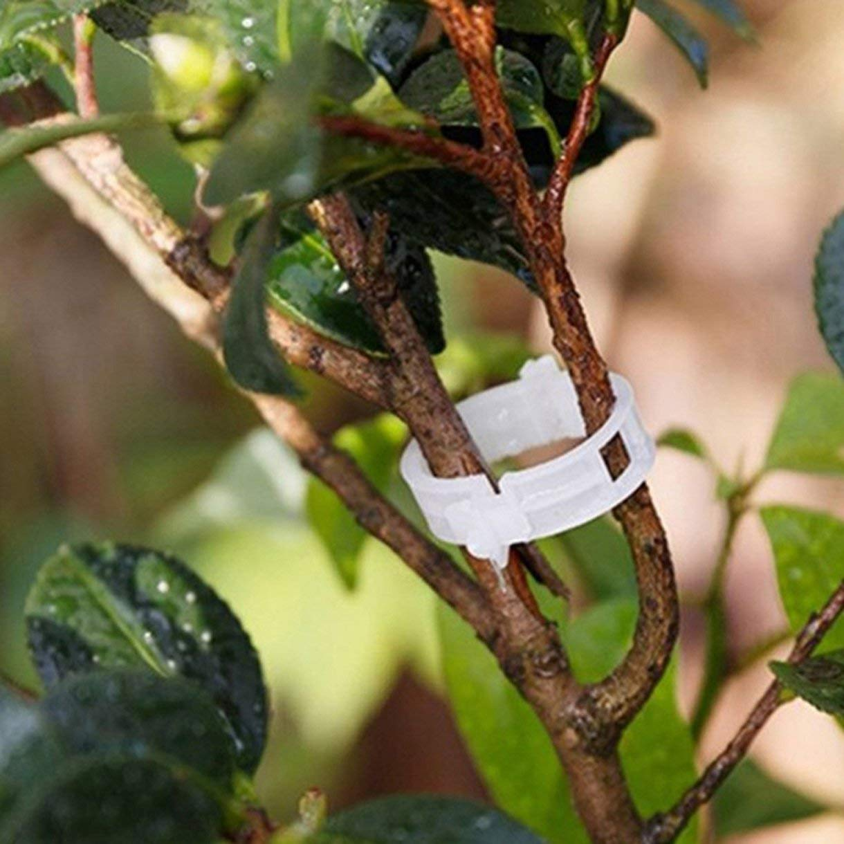 Set Vine Tomate v/ástago Clip de fijaci/ón de Verduras【K】 fengz Clips de pl/ástico Soporte de Plantas 50PCS