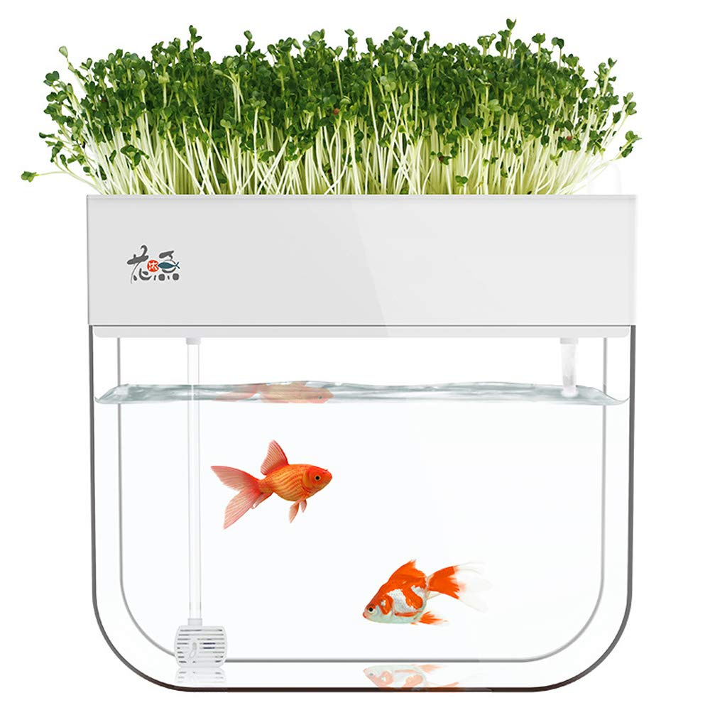 Aquaponic Fish Tank Grow Plants Seed Sprouter Wheatgrass Sprouts Hydroponic Cleaning Ecosystem Water Garden Fish Tank (White) by LeJoy Garden