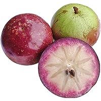 越南新鲜牛奶果 3斤(约4-6个) 金星果 星苹果装 应季孕妇牛奶果 热带水果