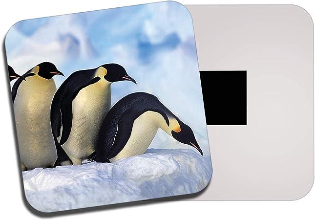 Cool emperador Pingüino FRIDGE MAGNET-Ártico nieve Pájaro Naturaleza Salvaje Divertido Regalo #8102
