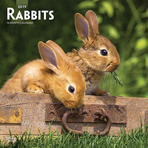 Pet Calendar - Rabbits 2019 12 x 12 Inch Monthly Square Wall Calendar, Domestic Pet Animals