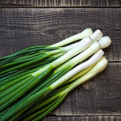 Tokyo Long White Bunching Onion Garden Seeds - Non-GMO, Heirloom Vegetable Gardening & Micro Greens Seed