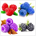 Loss Promotion! 1000pcs rare raspberry seeds organic fruit seeds green red blue purple black raspberry seeds for home garden plant easy to grow