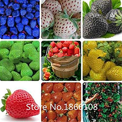 home & garden Hot selling 100pcs/bag blue strawberry rare fruit vegetable seed bonsai plant home garden free shipping