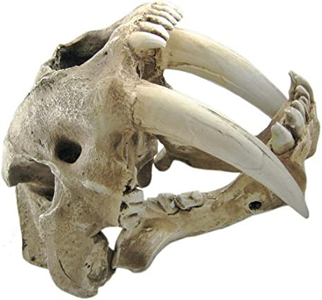 New Artificial bone Smilodon Saber-toothed Tiger Skull Museum Taxidermy Replica