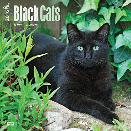 Black Cats - 2016 Calendar 12 x 12in