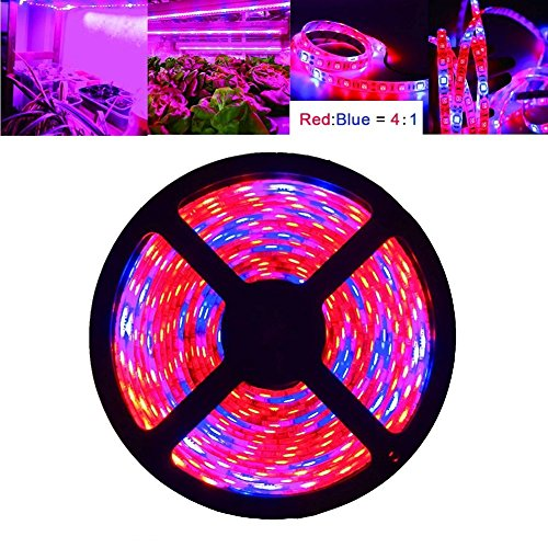 Plant Grow LED Light, OUEVA 16.4ft/5M 5050 SMD Waterproof Full Spectrum Red Blue 4:1 Growing Lamp for Aquarium Greenhouse Hydroponic Plant, Garden Flowers Veg Grow Light by OUEVA