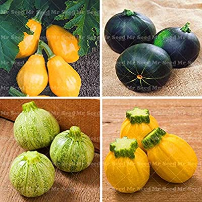 20pcs Rare Squash Plant Round Zucchini Plant Organic Heirloom Bonsai Vegetable Potted Plant for Home