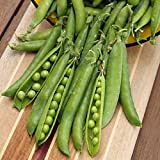 buy David's Garden Seeds Pea Green Arrow S152040ZX (Green) 100 Organic Heirloom Seeds now, new 2018-2017 bestseller, review and Photo, best price $8.49