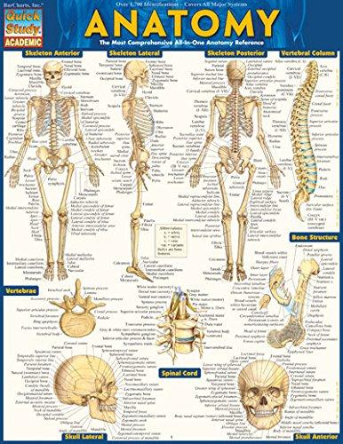 Bar Charts Anatomy Study Guide Med/Health QuickStudy FBA_9781423222781