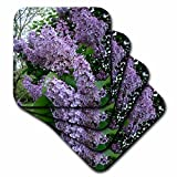 3dRose cst_3139_3 Lilac-Ceramic Tile Coasters, Set of 4