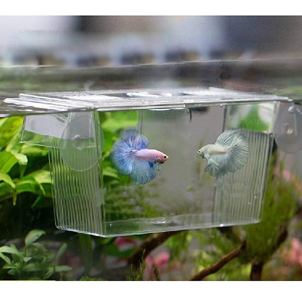 BAOLIJIN Pet Caja de Aislamiento de Caja de cría de Peces de Acuario de plástico Caja de incubación de criadero de criadores de Acuario con ventosas: ...