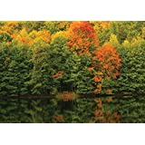 JP London MDXL91073PS Peel and Stick Autumn Trees, the Lake Forest Full Wall Mural, 12' x 8.5'