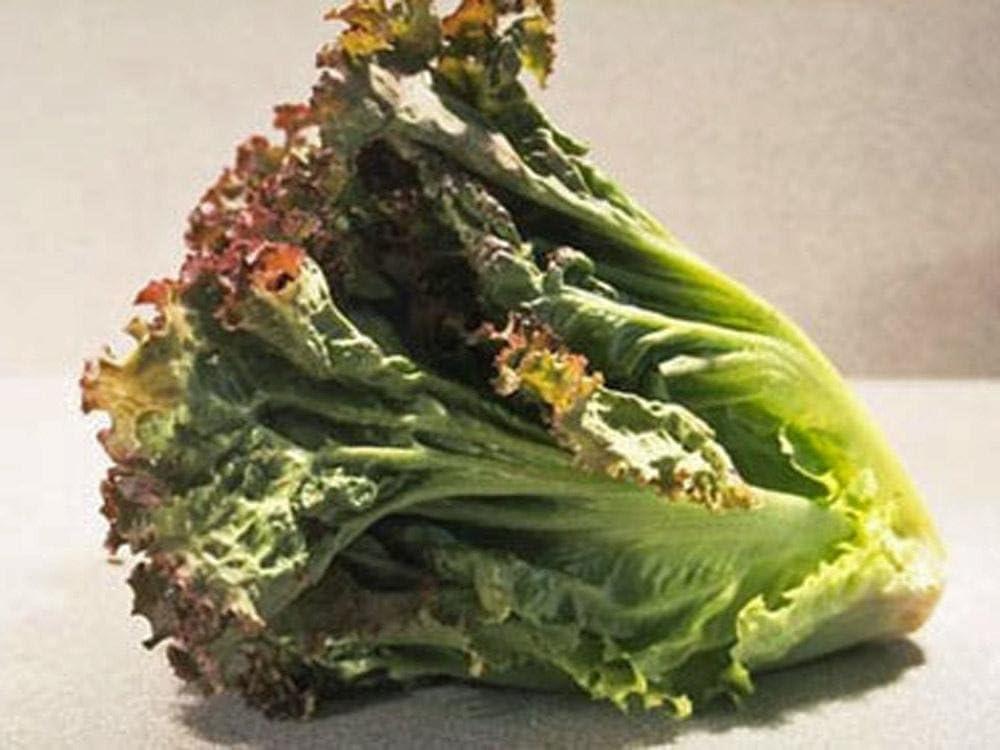 Hoja de lechuga, prizehead Lechuga semillas, orgánico, non-gmo ...