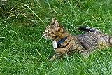 Cat Tracker RF Finder Longest Range up to 1600 ft