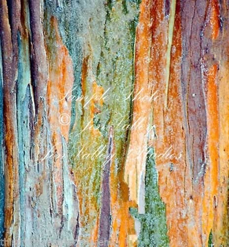 Amazon Com Eucalyptus Botryoides Seeds Southern Mahogany Multi