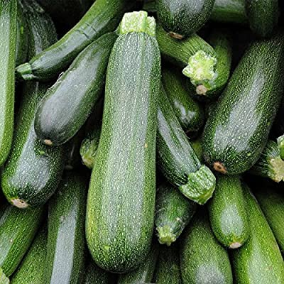 Spineless Beauty Zucchini Summer Squash Garden Seeds (Treated) - Non-GMO - Vegetable Gardening Seed