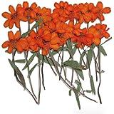 fiori pressati, arancione zinnia 20 pezzi per arte floreale, mestiere, facendo carta, scrapbooking