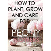 HOW TO PLANT, GROW, AND CARE FOR PEONY FLOWERS