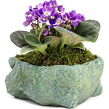 Natural Elements Rock Planter (Blue Lagoon) – Realistic with Intricate Stone Detail + Fiber Soil + Moss Mulch. Grow Succulents, Cactus, African Violets and Bonsai. Striking in Any Décor.
