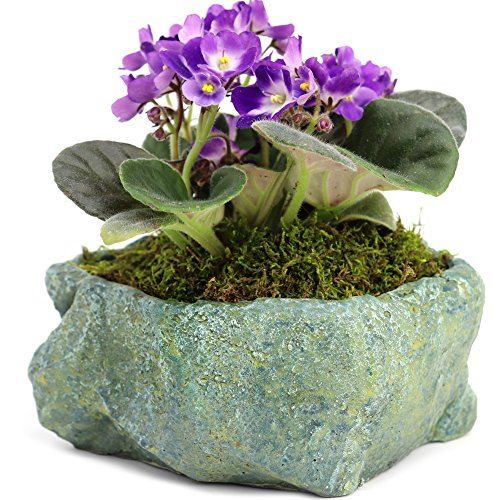 - Natural Elements Rock Planter (Blue Lagoon) – Realistic with Intricate Stone Detail + Fiber Soil + Moss Mulch. Grow Succulents, Cactus, African Violets and Bonsai. Striking in Any Décor.