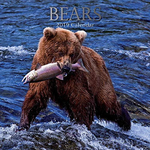2019 Wall Calendar - Bears Calendar, 12x12 Inch Monthly View, 16-Month, Jungle Animals Theme, Includes 180 Reminder Stickers (Bear Calendar)