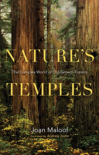 Nature's Temples: The Complex World of Old-Growth - Growth Old Redwood