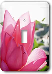 3dRose LSP_83490_1 Pink Lotus Flower in Full Bloom. Mantua, Italy Na01 Mme0026 Michele Molinari Single Toggle Switch
