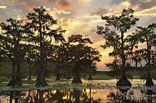 Collection Black Moss Finish - 8x10 Swamp Photo Print,Caddo Lake Sunrise by TravLin Photography