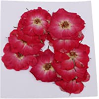 Baoblaze 10pcs Assorted Real Dried Flower Pressed Flower DIY Scrapbooking Albums Cards Making Supply - Red Rose