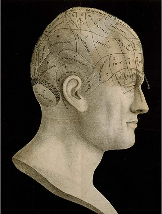 SCIENCE PHRENOLOGY HEAD SPURZHEIM ORGAN BRAIN Vintage Canvas art Prints