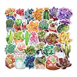 Homyu Stickers Pack 70-Pcs Decals of Cactus and Succulent Plants for Laptops Cars Motorcycle Portable Luggages Ipad Waterproof Sunlight-Proof