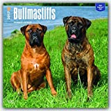 Bullmastiffs 2017 Square (Multilingual Edition)
