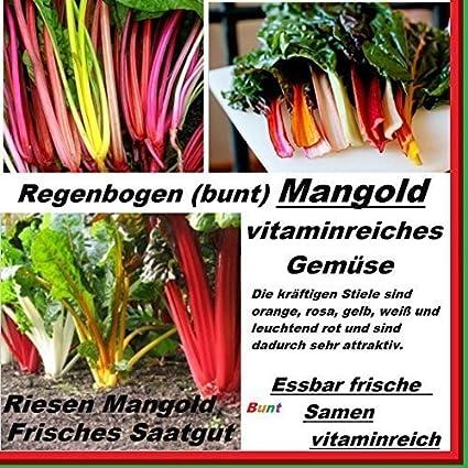 Amazon Com 40x Riesen Big Regenbogen Mangold F1 Samen Neu Sorte