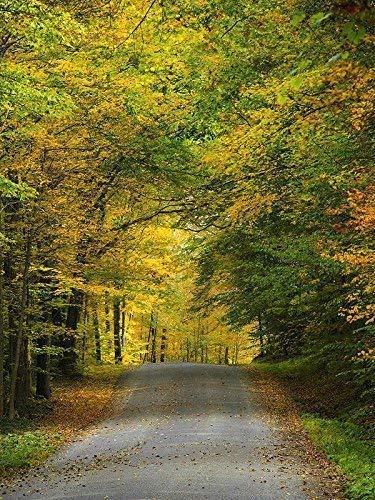 Amazon Com Fall Foliage Colorful Autumn Trees Scenic Landscape