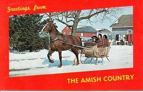 Unsent Postcard Amish Country One Horse Open Sleigh Winter Transportation photo by Vincent Tortora