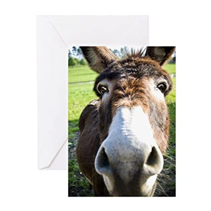 Amazon Cafepress Curious Donkey Greeting Card Note Card