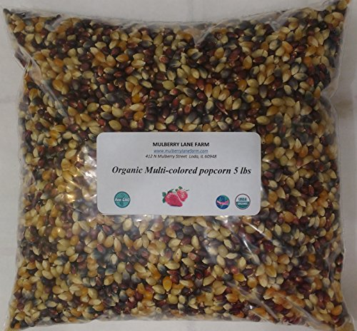 Multi-colored Popcorn Popping Corn 5 lbs (Five pounds) (Calico or Rainbow) Kernels, Whole Grain, USDA Certified Organic, Non-GMO ~ BULK