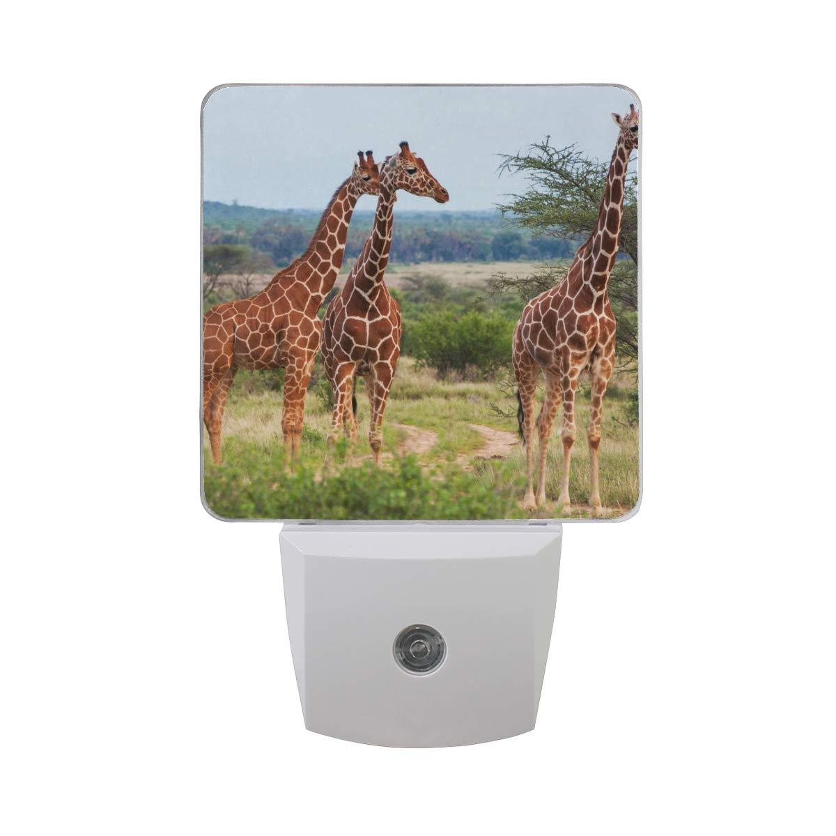 Night Light Giraffe On The Prairie Led Light Lamp for Hallway, Kitchen, Bathroom, Bedroom, Stairs, DaylightWhite, Bedroom, Compact