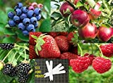 Fruit Combo Pack Raspberry, Blackberry, Blueberry, Strawberry, Apple (Organic) 525+ Seeds 647923989472 Self Fertile + 5 Free Plant Marker - Stocking Stuffers