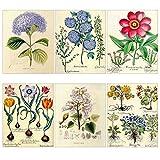Vintage Posters Prints Floral Flowers Wall Art Decor Botanical Pop Old-Fashioned Illustration 6pcs